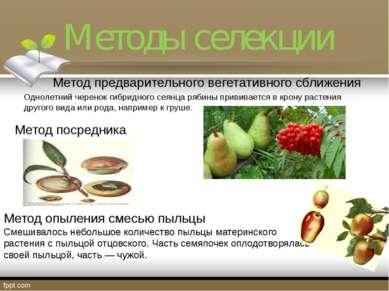 Методы селекции Метод предварительного вегетативного сближения Однолетний чер...