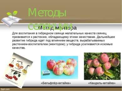 Метод ментора Для воспитания в гибридном сеянце желательных качеств сеянец пр...