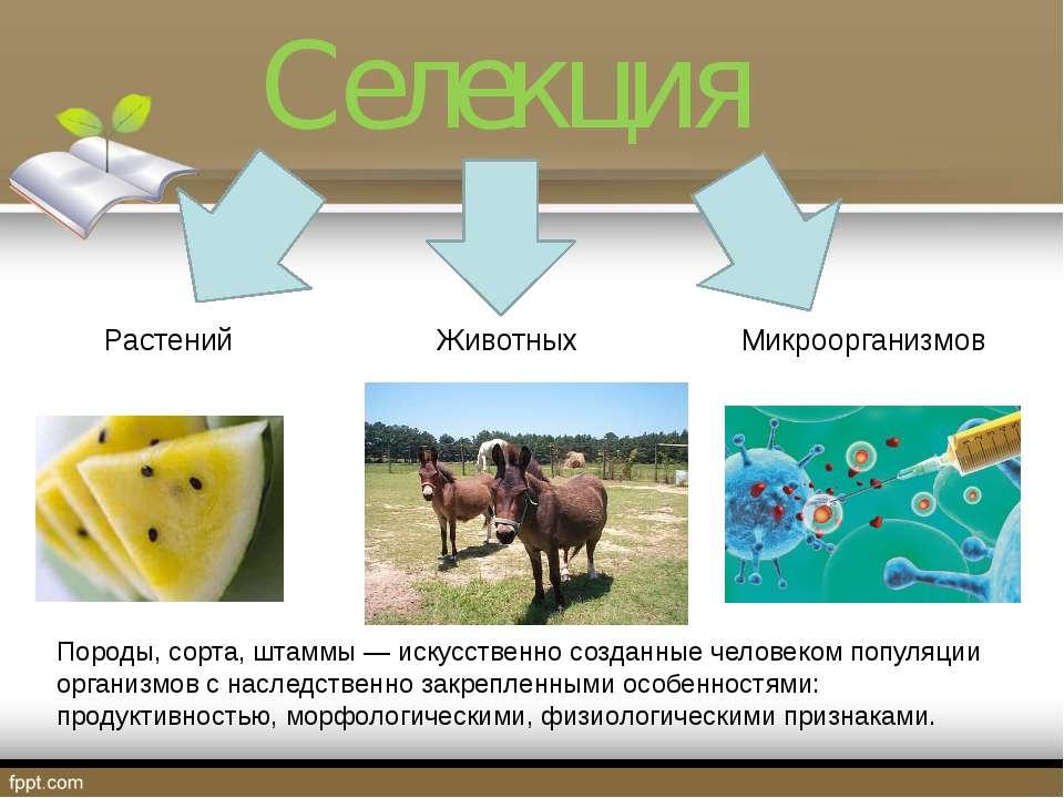 Селекция Растений Животных Микроорганизмов Породы, сорта, штаммы — искусствен...