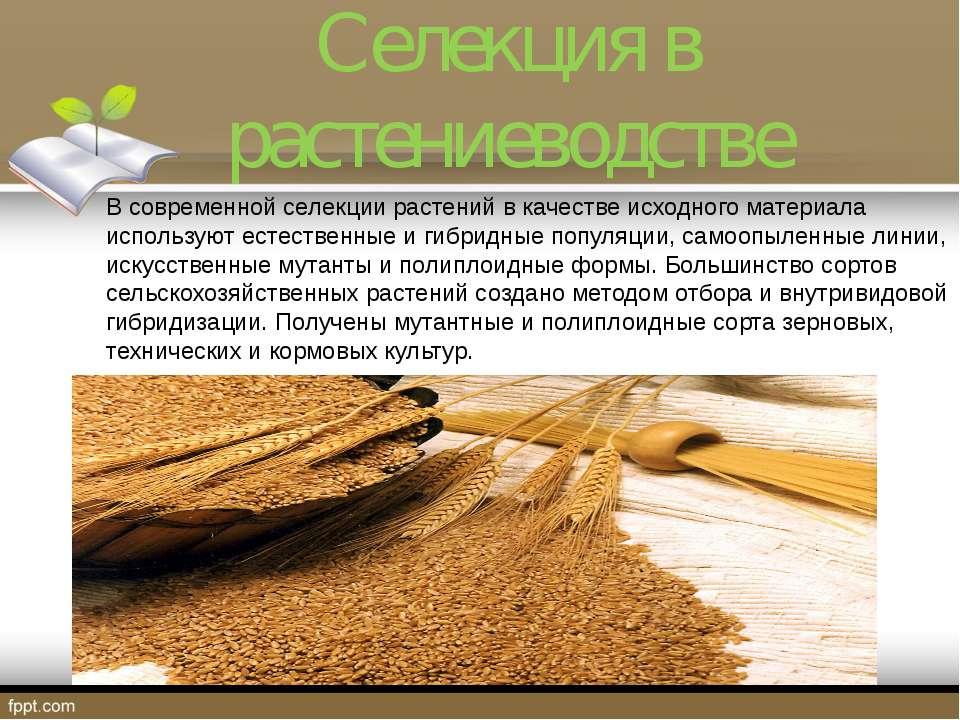 Селекция в растениеводстве В современной селекции растений в качестве исходно...