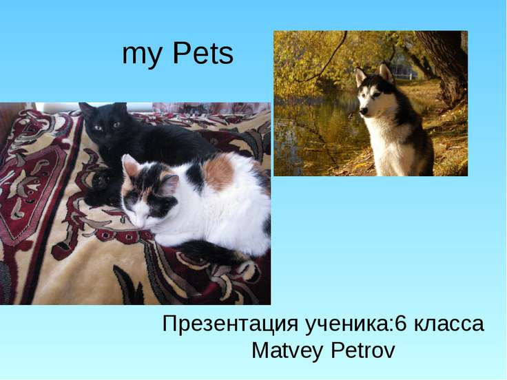 my Pets Презентация ученика:6 класса Matvey Petrov