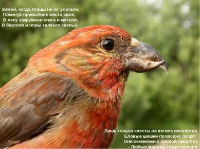 Зимой, когда птицы на юг улетели, Покинув привычное место своё, В лесу закруж...