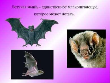 Летучая мышь - единственное млекопитающее, которое может летать.