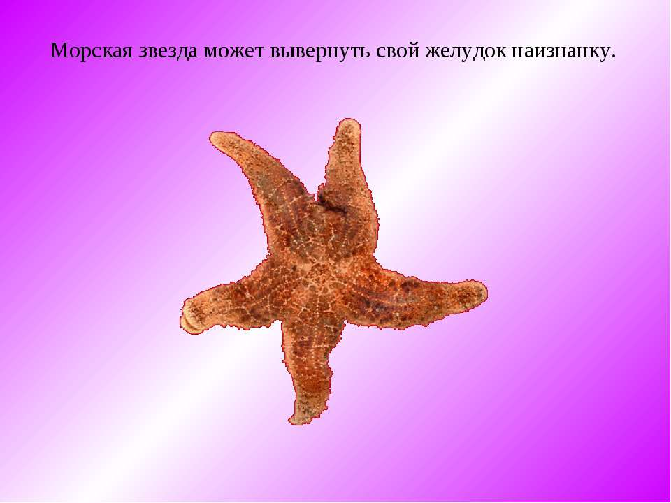 Морская звезда может вывернуть свой желудок наизнанку.