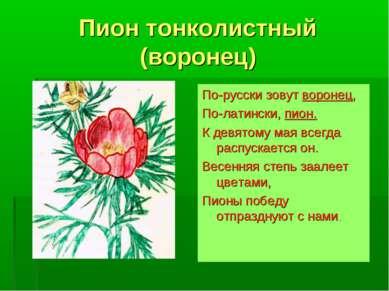 Пион тонколистный (воронец) По-русски зовут воронец, По-латински, пион. К дев...