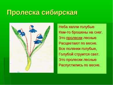 Пролеска сибирская Неба капли голубые Кем-то брошены на снег. Это пролески ле...
