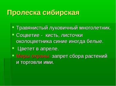 Пролеска сибирская Травянистый луковичный многолетник. Соцветие - кисть, лист...