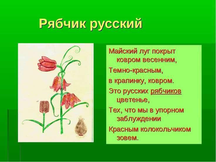 Рябчик русский Майский луг покрыт ковром весенним, Темно-красным, в крапинку,...