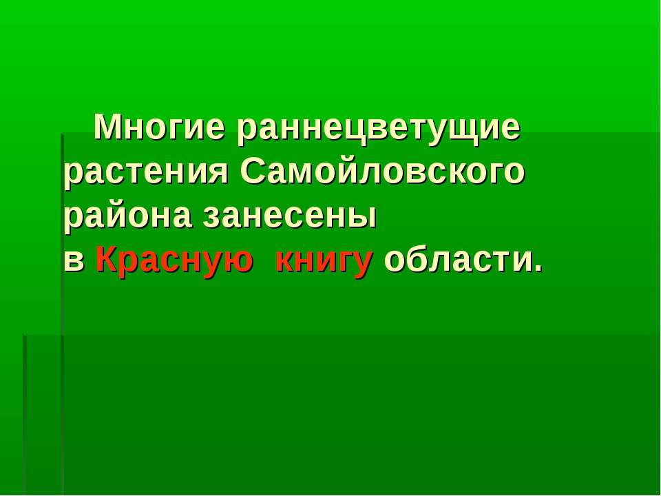 Многие раннецветущие растения Самойловского района занесены в Красную книгу о...