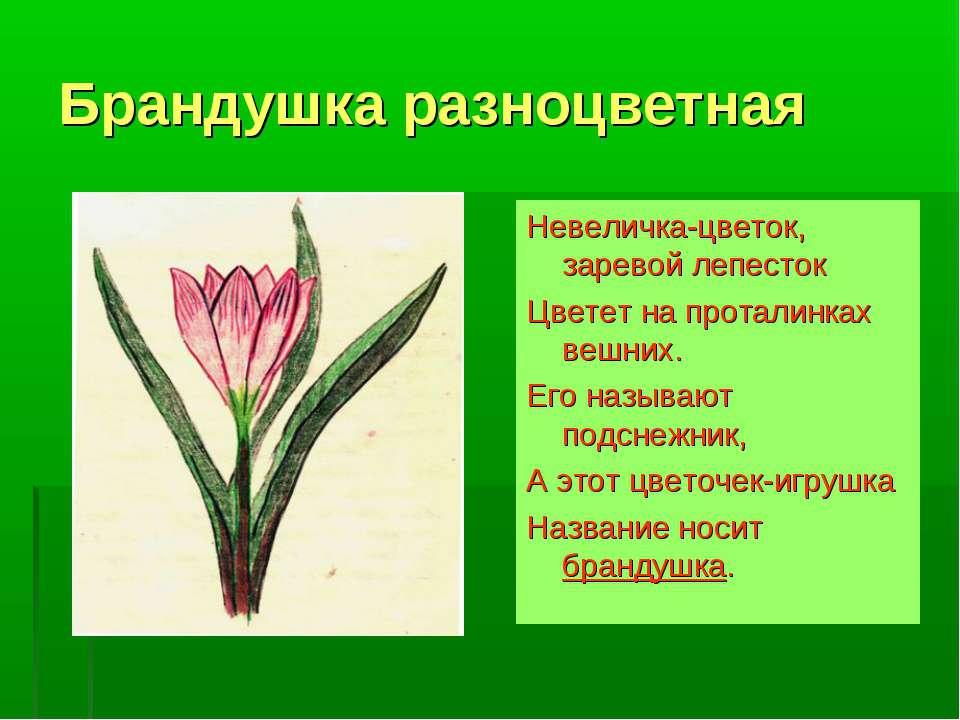 Брандушка разноцветная Невеличка-цветок, заревой лепесток Цветет на проталинк...