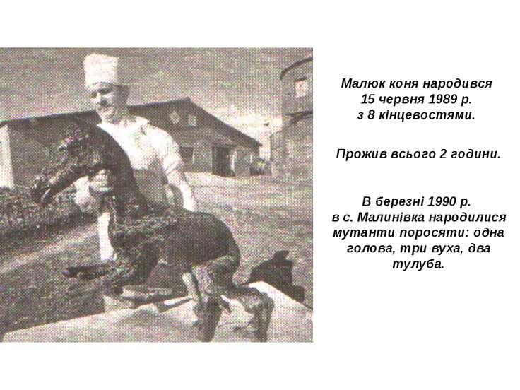 Малюк коня народився 15 червня 1989 р. з 8 кінцевостями. Прожив всього 2 годи...