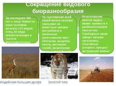 Сокращение видового биоразнообразия За последние 400 лет с лица Земли по вине...