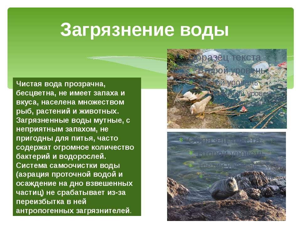 Загрязнение воды Чистая вода прозрачна, бесцветна, не имеет запаха и вкуса, н...