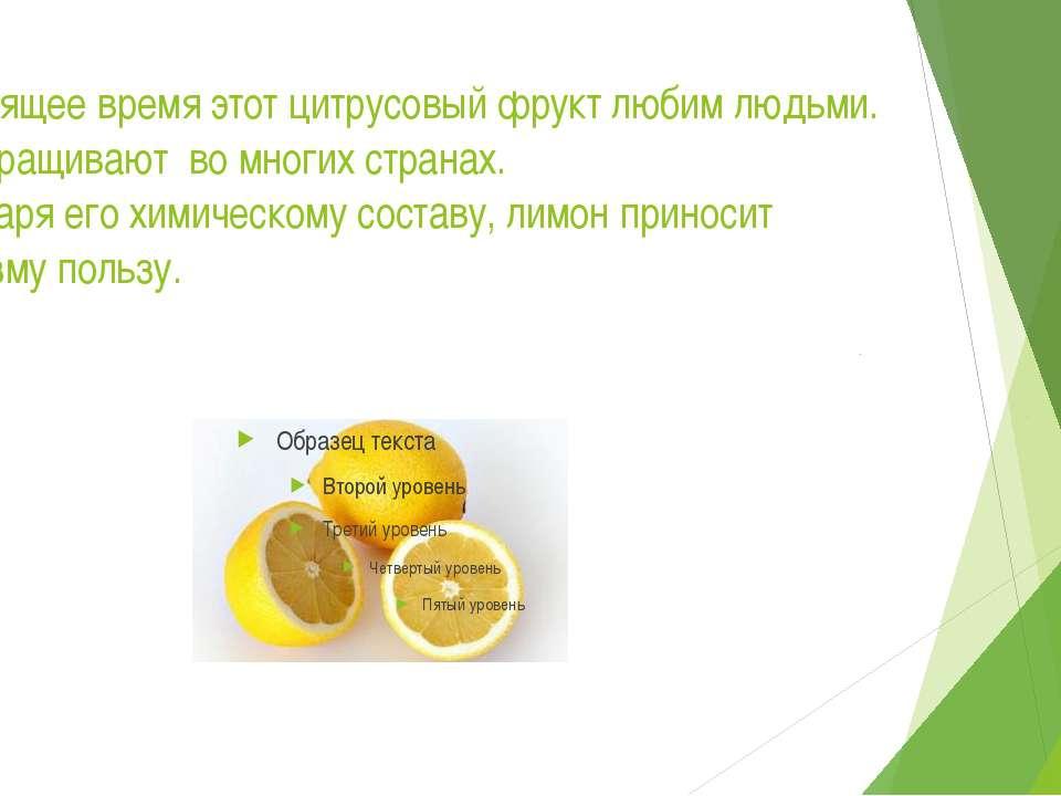 В настоящее время этот цитрусовый фрукт любим людьми. Его выращивают во многи...