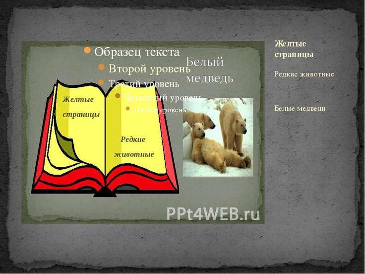 Редкие животные Белые медведи Желтые страницы