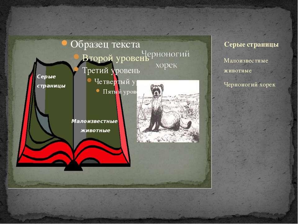 Малоизвестные животные Черноногий хорек Серые страницы