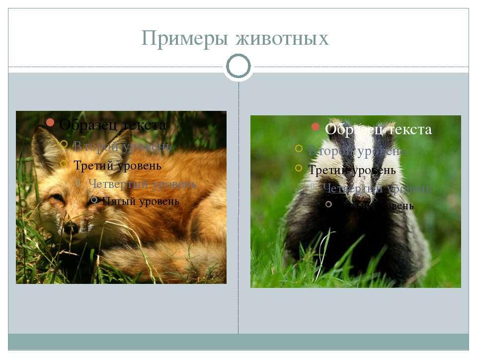 Примеры животных