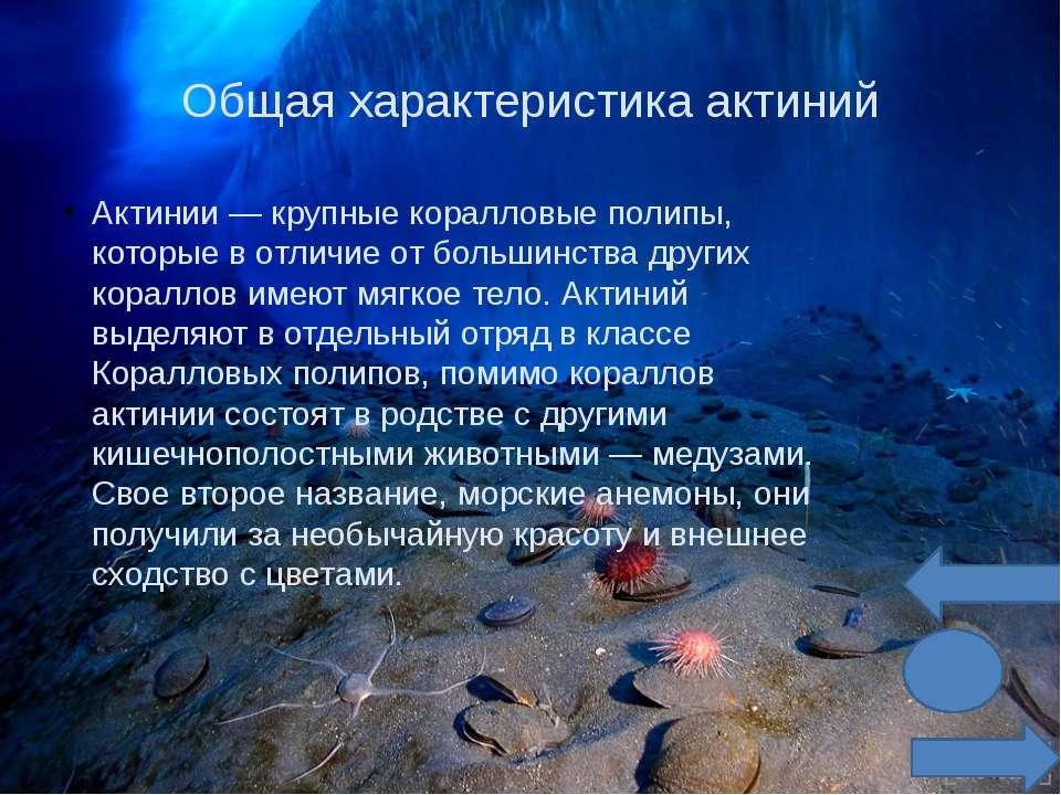 Но такая красота далеко не безопасна для других морских обитателей. Морская а...