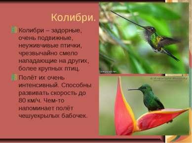 Колибри. Колибри – задорные, очень подвижные, неуживчивые птички, чрезвычайно...