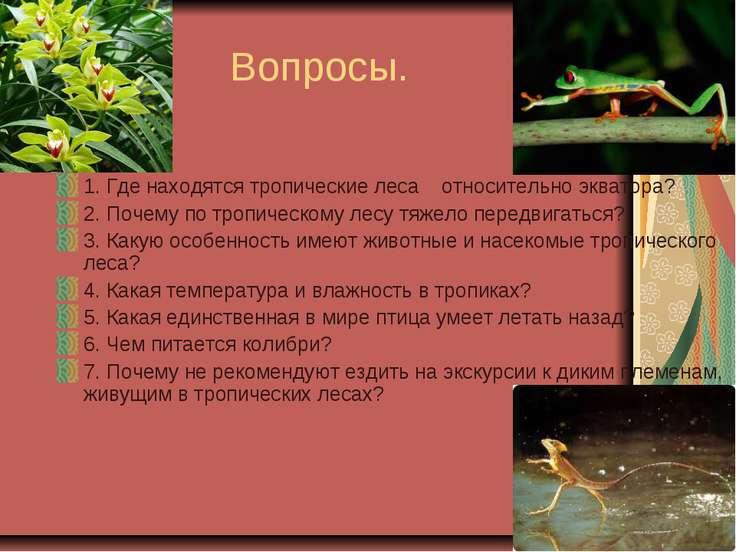 Вопросы. 1. Где находятся тропические леса относительно экватора? 2. Почему п...