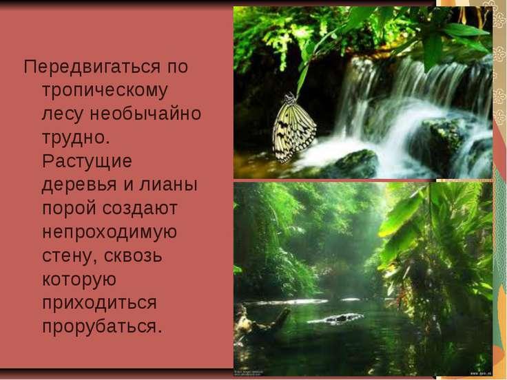 Передвигаться по тропическому лесу необычайно трудно. Растущие деревья и лиан...
