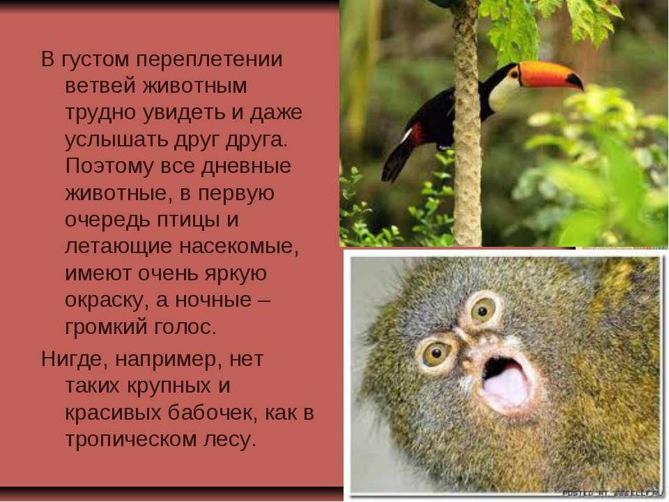 В густом переплетении ветвей животным трудно увидеть и даже услышать друг дру...