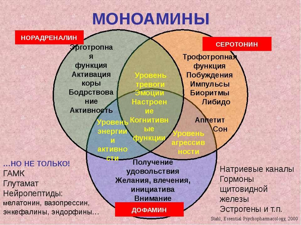 МОНОАМИНЫ Эрготропная функция Активация коры Бодрствование Активность Трофотр...