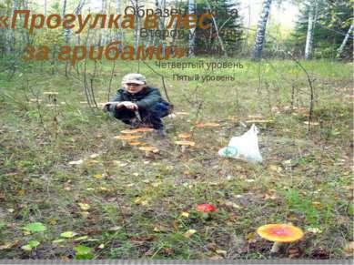 «Прогулка в лес за грибами»