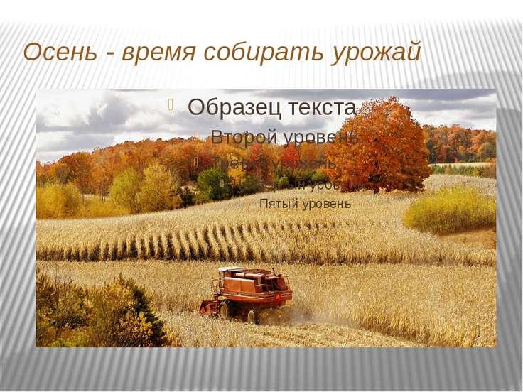 Осень - время собирать урожай