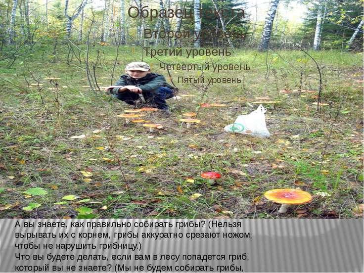 А вы знаете, как правильно собирать грибы? (Нельзя вырывать их с корнем, гриб...