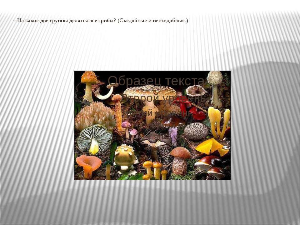 – На какие две группы делятся все грибы? (Съедобные и несъедобные.)