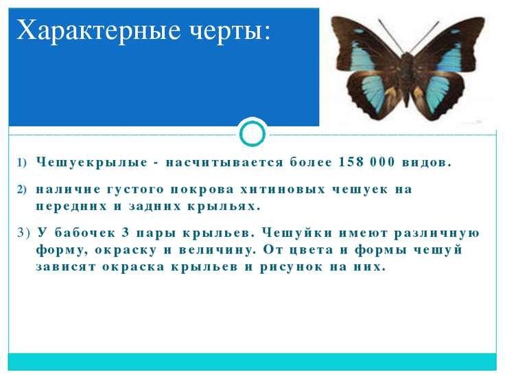 Чешуекрылые -насчитывается более 158000 видов. наличие густого покрова хити...