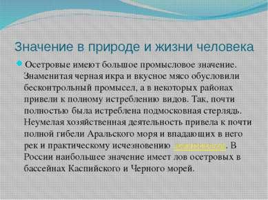 Значение в природе и жизни человека Осетровые имеют большое промысловое значе...