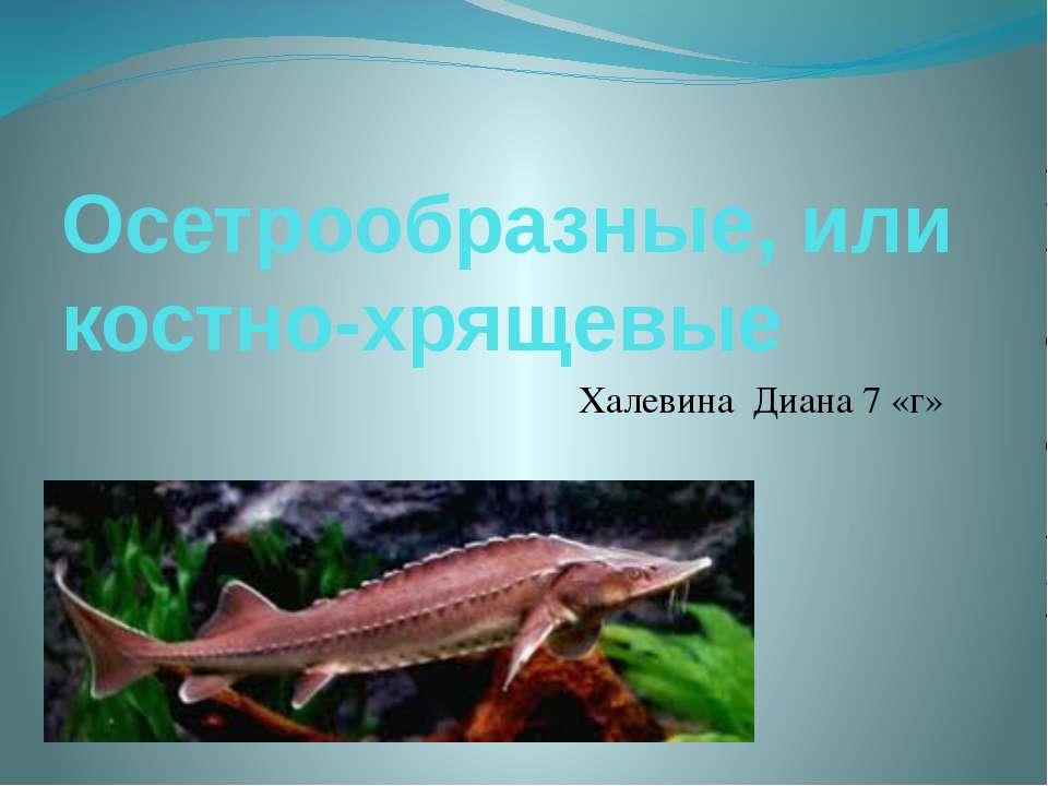 Осетрообразные, или костно-хрящевые Халевина Диана 7 «г»