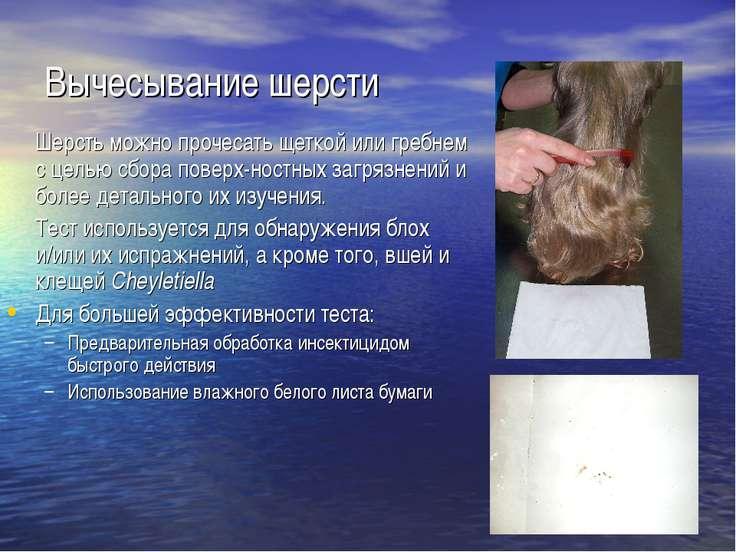 Вычесывание шерсти Шерсть можно прочесать щеткой или гребнем с целью сбора по...