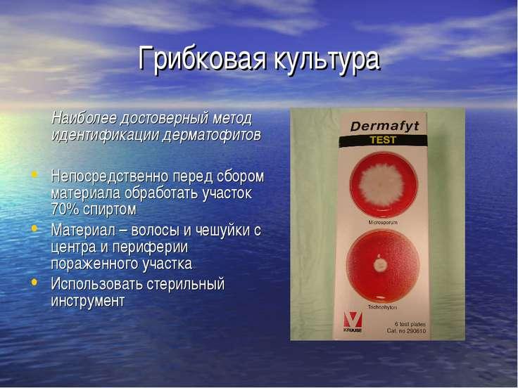 Грибковая культура Наиболее достоверный метод идентификации дерматофитов Непо...