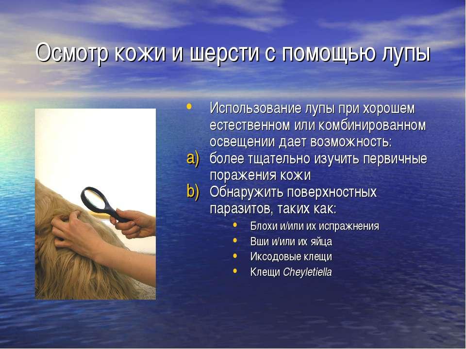Осмотр кожи и шерсти с помощью лупы Использование лупы при хорошем естественн...