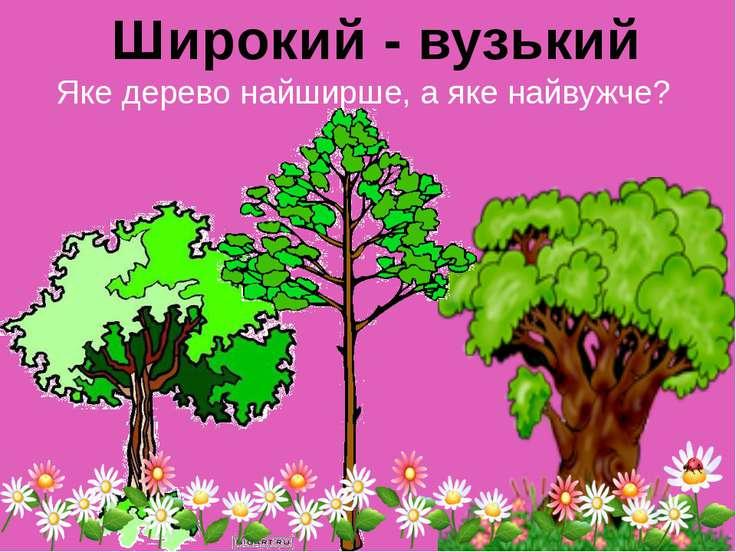Яке дерево найширше, а яке найвужче? Широкий - вузький