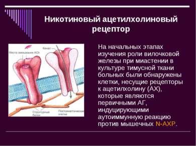Никотиновый ацетилхолиновый рецептор На начальных этапах изучения роли вилочк...