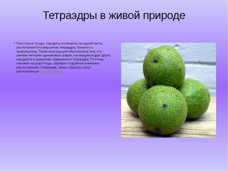 Тетраэдры в живой природе Некоторые плоды, находясь вчетвером на одной кисти,...
