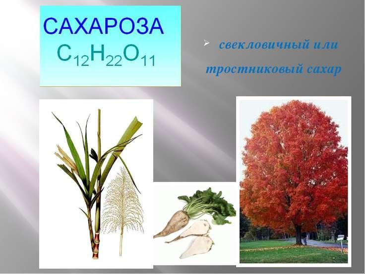 свекловичный или тростниковый сахар