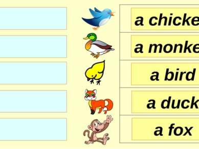 a chicken a monkey a bird a fox a duck
