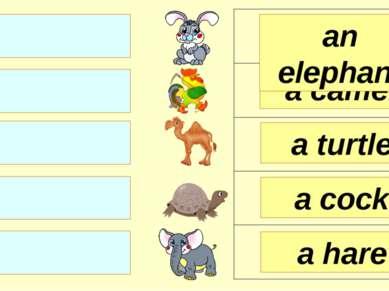a turtle a camel an elephant a cock a hare