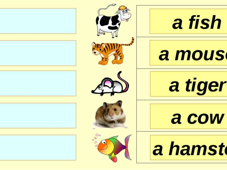 a fish a mouse a tiger a hamster a cow