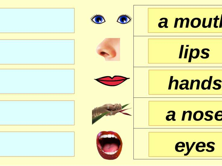 hands lips a mouth a nose eyes