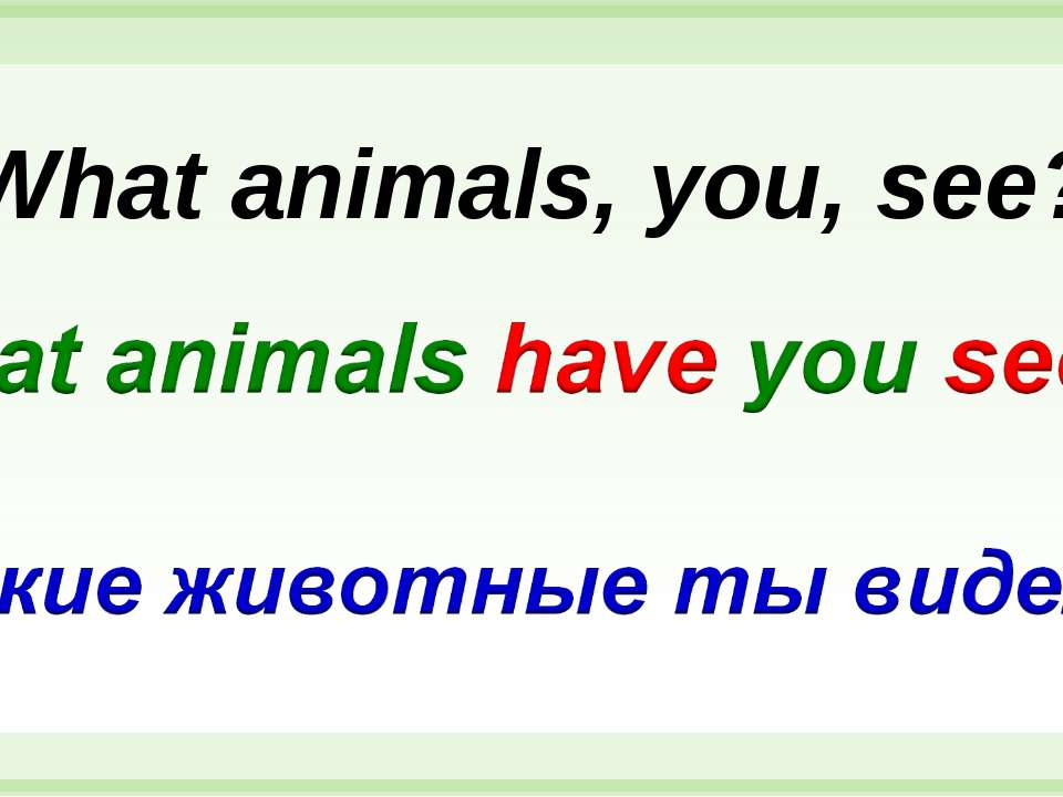 What animals, you, see?