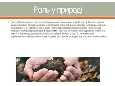 Роль у природі Бактерії викликають гниття загиблих рослин і тварин на землі і...