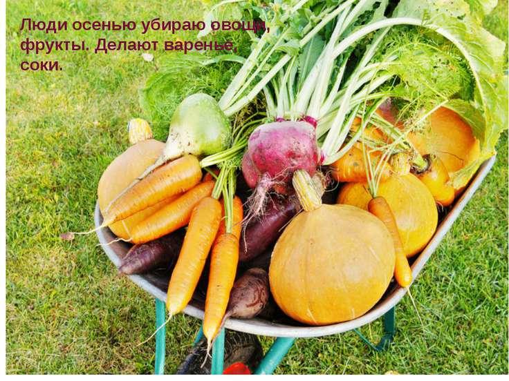 Люди осенью убираю овощи, фрукты. Делают варенье, соки.