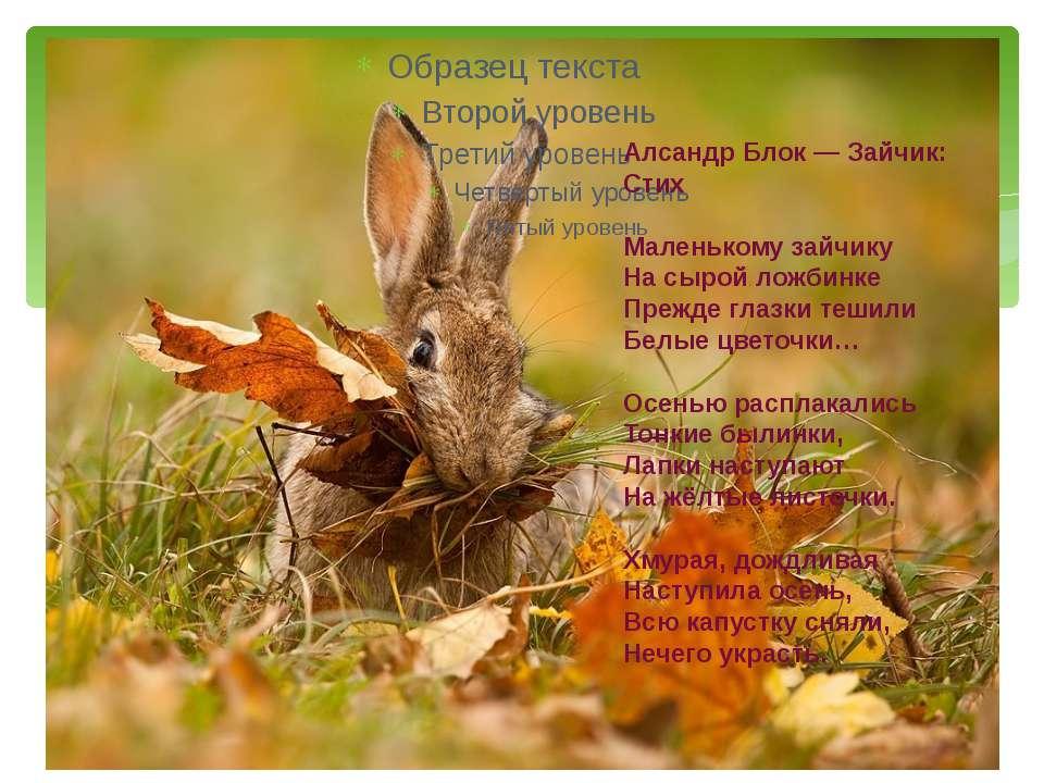 Алсандр Блок — Зайчик: Стих Маленькому зайчику На сырой ложбинке Прежде глазк...