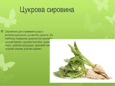 Цукрова сировина Сировиною для отримання цукру є рослини-цукроноси, що містят...